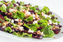 Beetroot walnuts salad with lettuce and feta cheese dressed with olive oil and balsamic vinegar Royalty Free Stock Image