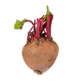 Beetroot on white background Royalty Free Stock Photos