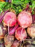 beetroots Obrazy Royalty Free