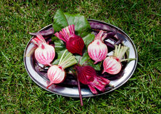 Beetroots. Fresh vegetables from the garden Stock Image