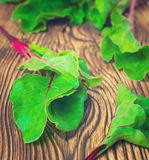 Beetroots leaves closeup Royalty Free Stock Photo