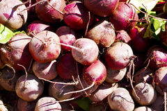 Beets. A stalk of beets for sale in a farmer's market Royalty Free Stock Image