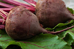 Beets on a background of old metal. Royalty Free Stock Images