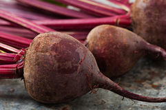 Beets on a background of old metal. Royalty Free Stock Photos