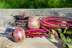 Beets  from the beds on old boards Royalty Free Stock Images