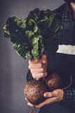 Beets or beetroot in farmer hands Stock Photos