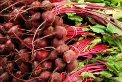Beets, Beets and more Beets Royalty Free Stock Photo
