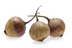 Beets (Beta vulgaris) Royalty Free Stock Images