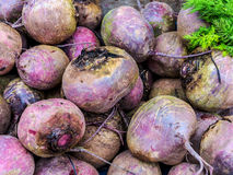 Beets (Beta vulgaris) Stock Photography