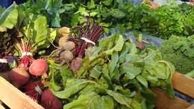 Beets and cabbage in a basket. Fresh red beets, cabbage and herbs in a basket at harvest in autumn royalty free stock images