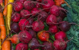 Organic vegetables. Beets , carrots and greens for sale at market Stock Photos