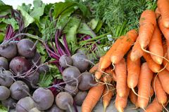 Beets and Carrots Stock Images