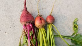 Beets 1 royalty free stock images