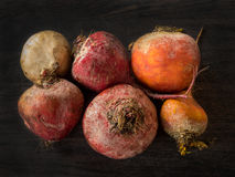 Beets in different colors on a dark background Royalty Free Stock Image