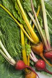 Beets with greens. Royalty Free Stock Photography