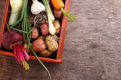 Beets, onions, garlic, dill, potatoes, carrots on an old wooden background. Vegetables in a basket: beets, onions, garlic, dill, potatoes, carrots on an old Royalty Free Stock Photography