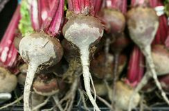 Beets Stock Photography