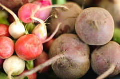 Beets and radish Stock Images