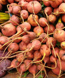 Beets royalty free stock photography