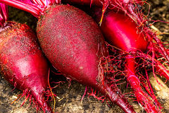 Beets on the wooden table Royalty Free Stock Photo