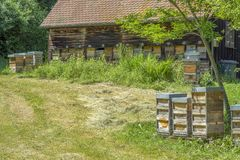 Beeyard with apiaries. Beeyard with lots of apiaries at summer time Royalty Free Stock Images