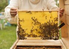 Beeyard y abejas que controlan del apicultor Imágenes de archivo libres de regalías