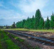Befördern Sie Sommertag mit grünem Gras und Bäumen mit dem Zug Lizenzfreie Stockfotografie