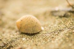 Befestigungsklammer auf dem Sand Stockfotos