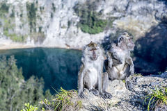 Befestigungsklammer-Essen von Macaque Stockfotos