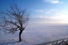 Befestigungsklammerbaum auf einem Wintersturm Stockbild