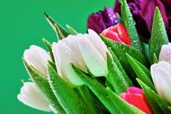 Befeuchten Sie abgedeckte Tulpeblumen Stockbild