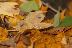 Befeuchten Sie auf den Blättern an einem wunderbaren Herbsttag Lizenzfreies Stockbild