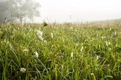Befeuchten Sie auf Gräsern auf einem Gebiet in Cades-Bucht lizenzfreie stockfotos