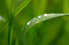 Befeuchten Sie auf Gras stockbilder