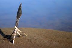 Befjädra fastnat i sanden på stranden arkivfoto