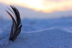 Befjädra i sanden Arkivfoto