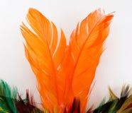 befjädrar orangen Royaltyfri Fotografi