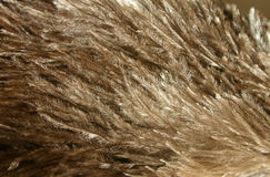 befjädrar ostrichen Royaltyfri Foto