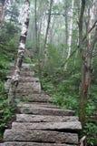 Beflaggung im Wald Stockbilder