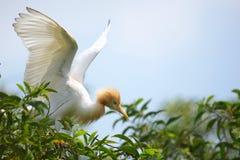 Befor Flit. White Bird in the nest Stock Images