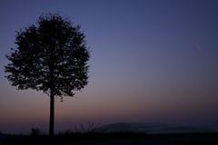 Befor Sunris van de boom Stock Afbeelding