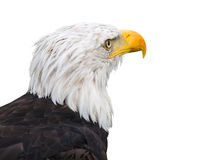 Eagle Stockbild