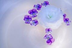 Begónia e Violas em uma bacia de vidro Foto de Stock Royalty Free
