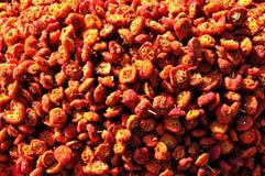 Begónia seca Foto de Stock