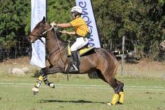 Begabter Polocrosse-Spieler Stockfoto