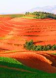 Begeleid door het rode terrasvormige landschap van het bomenland Royalty-vrije Stock Foto's