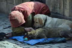 Beggar begging with dogs Royalty Free Stock Photos