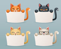 Beggar cats animals need help paws hold blank paper cartoon 3d characters set vector illustration. Beggar cats animals help need paws hold blank paper cartoon 3d Royalty Free Stock Photos