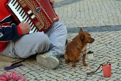 Beggar producing music in street Stock Photos