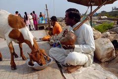Beggars in India Royalty Free Stock Images